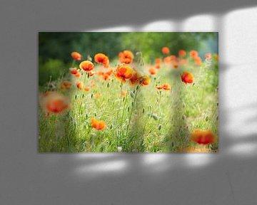 Soft poppy's van Willem Havenaar
