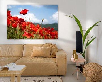 Poppy's  van Willem Havenaar