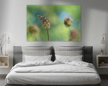 Vlinder van Gonnie van de Schans