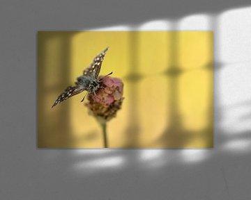 Aardbeivlinder van Gonnie van de Schans