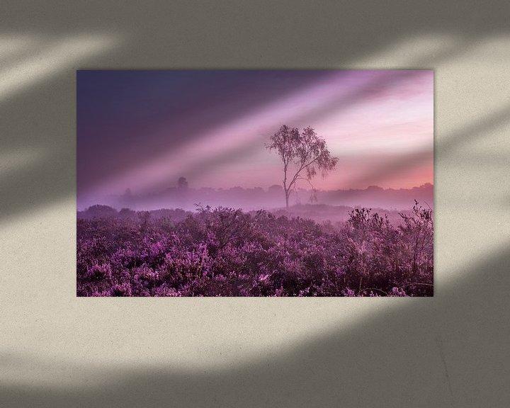 Sfeerimpressie: Kalmthoutse Heide  van Tom Opdebeeck