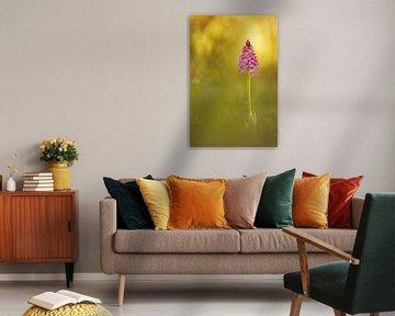 wilde orchideeën III van Daniela Beyer
