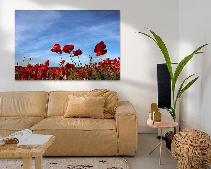 Beispiel: Mohnblumen im Wind von Ostsee Bilder