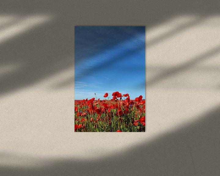Beispiel: Mohnblumen von Ostsee Bilder
