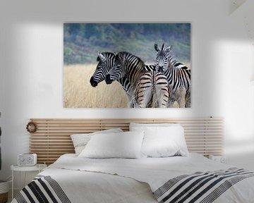Zebra's in Swaziland von René Meester