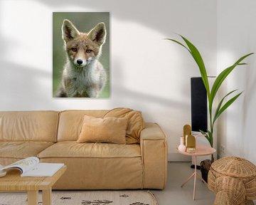 Portret van een jonge vos von Menno Schaefer