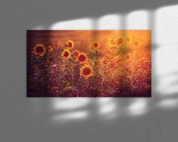 sunflowers in last sunlight.....  von Els Fonteine