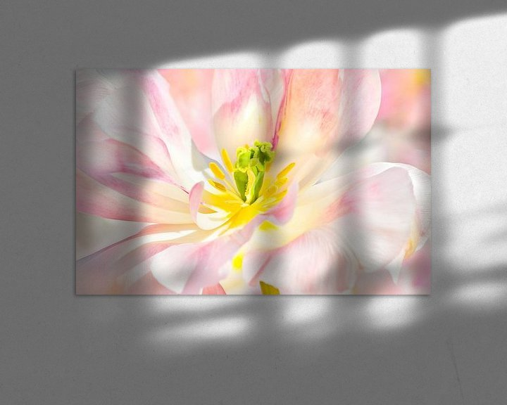 Sfeerimpressie: TulipCloseup van Dalex Photography