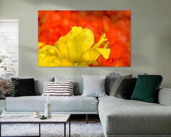 Sfeerimpressie: Red and Yellow van Dalex Photography