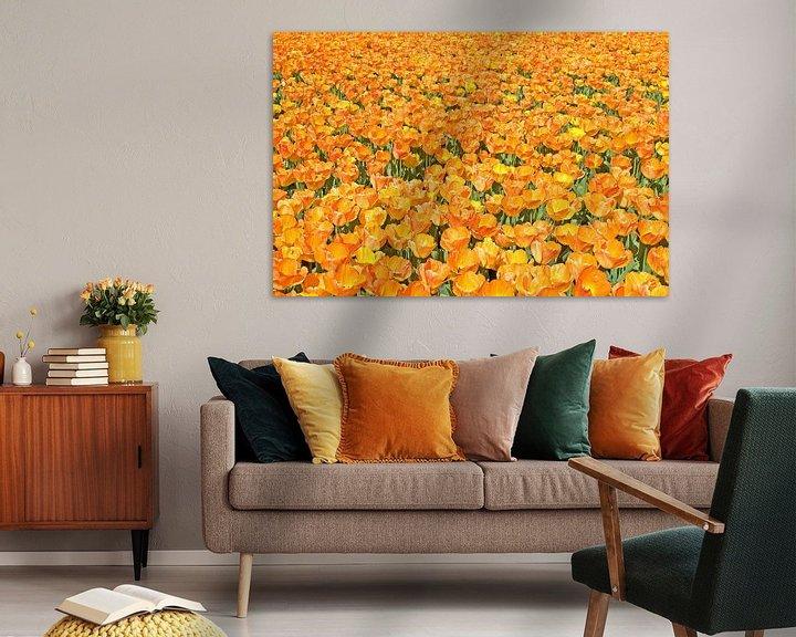 Sfeerimpressie: OrangeTulips van Dalex Photography
