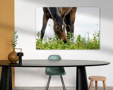 Paard in de wei von Richard Guijt Photography