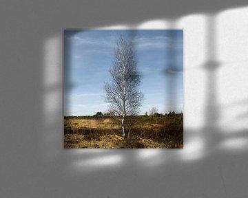 boom (vierkant) van Arno Photo