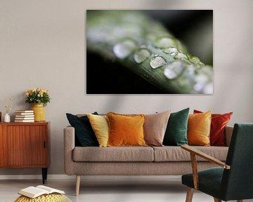 Wassertropfen auf einem Agave Blatt  von Fotografie Jeronimo