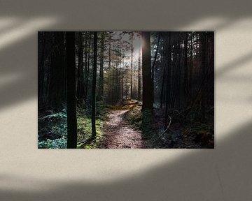 A path to something sur Twan van Lieshout