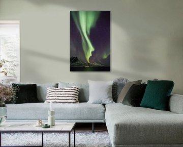 Northern Lights, Grøtfjord von Freek van den Driesschen