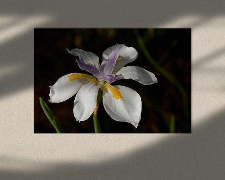 Sfeerimpressie: Iris bloem van Arne Hendriks