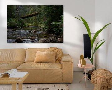 Stroompje in the regenwoud van Arne Hendriks