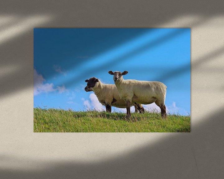 Beispiel: Schafe auf dem Deich  von Angela Dölling