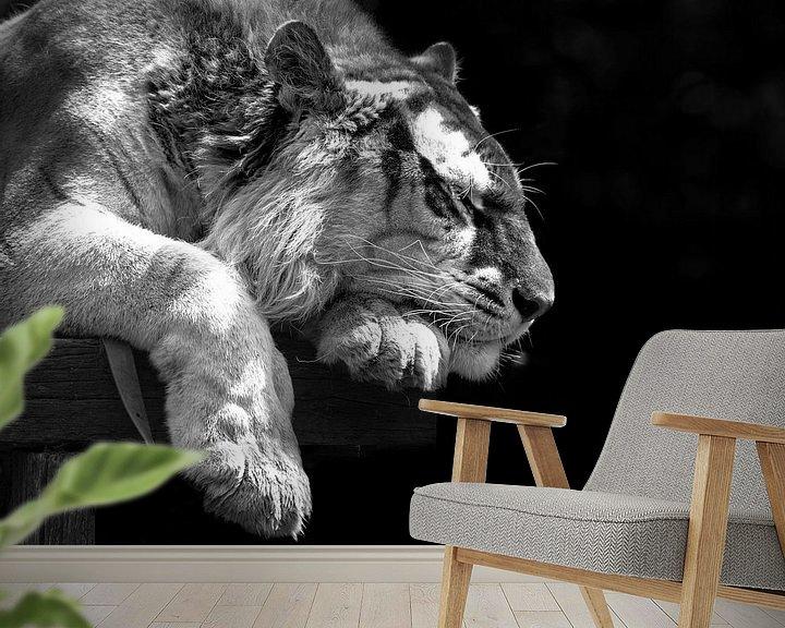 Beispiel fototapete: Bengaalse tijger slaapt. von Michar Peppenster