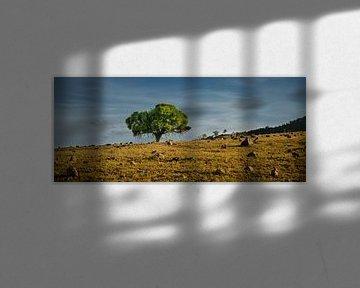 Grüne und trocken; Eastern Australia von Sven Wildschut