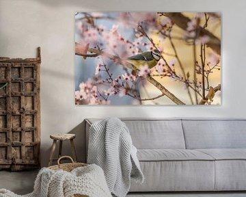 Blaumeise im Kirschbaum van Patrice von Collani