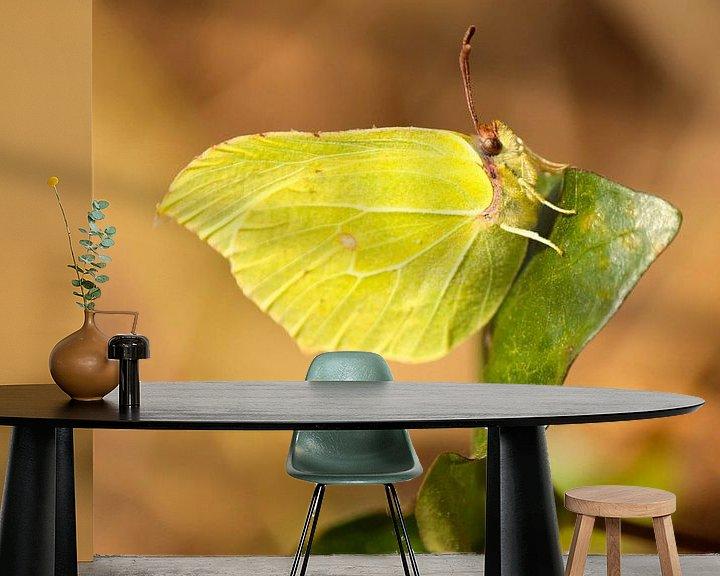 Sfeerimpressie behang: Citroenvlinder op een klimop van Lisa-Valerie Gerritsen