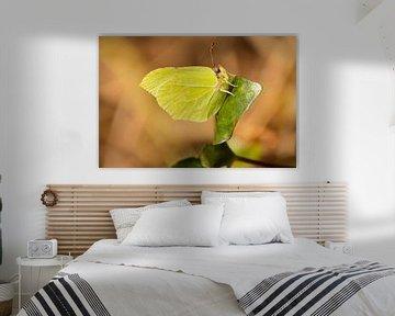 Citroenvlinder op een klimop van Lisa-Valerie Gerritsen
