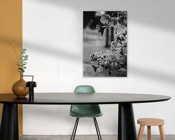 Bloemen in het zonlicht (zwart/wit) von Lisa-Valerie Gerritsen