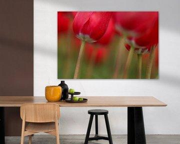 Rode Tulpen met stelen von Eddy 't Jong