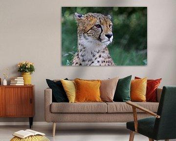 Cheetah - Africa wildlife van W. Woyke