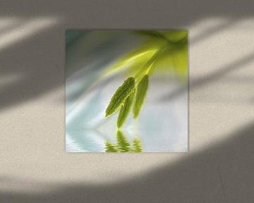 Tulp detail van Violetta Honkisz