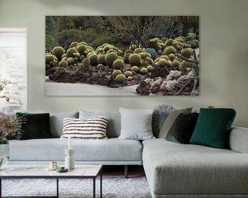 Cactus Schoonmoedersstoel in Huntington Gardens von Henk Alblas