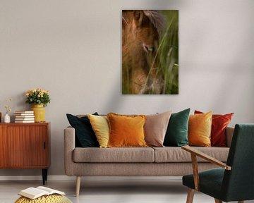 Paard in hoog grasland von Ger Loeffen