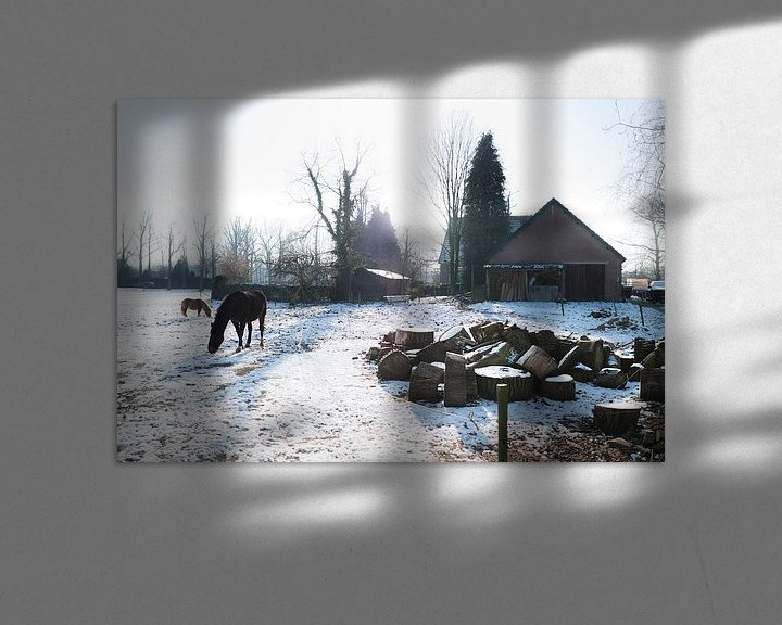Impression: Horses in snowy meadow sur Tommy Köhlbrugge