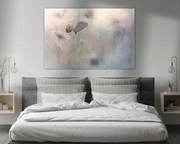 Beauty of dreams sur Bob Daalder