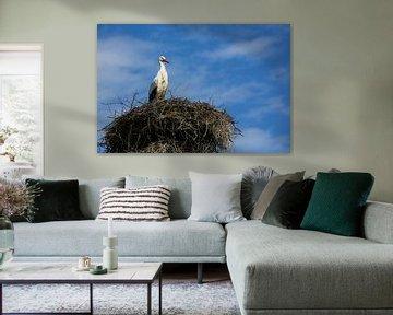 Ooievaar wacht op het nest van Fotografie Jeronimo