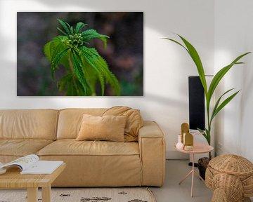 marihuana von Azucena Kouwenhoven