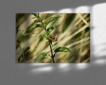 Vlinder von angela de baat