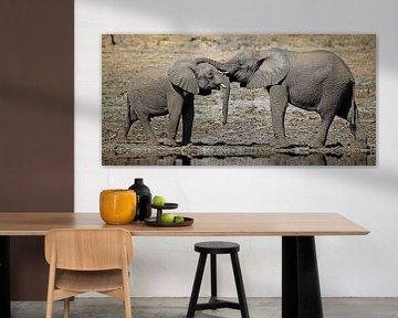Zweisamkeit - Afrika wildlife von W. Woyke