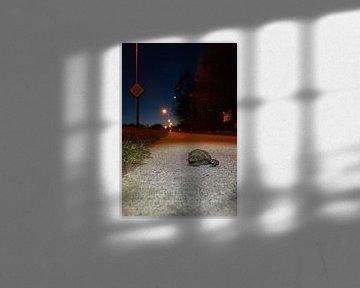 Paddentrek: samen op weg van Francois Debets