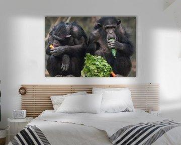 Chimpansees eten groenten. van Luuk van der Lee