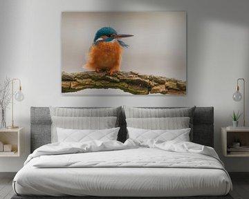 IJsvogel in de wind... van Hermen van Laar