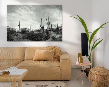 Cactusland  van Marlies van den Hurk Bakker