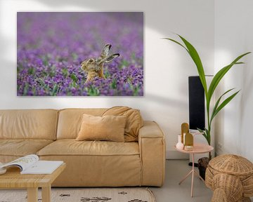 Haas in paars hyacinten veld von Menno van Duijn