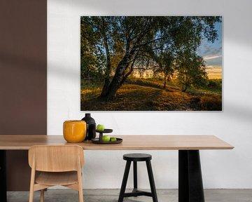 Sunrise Birches van William Mevissen