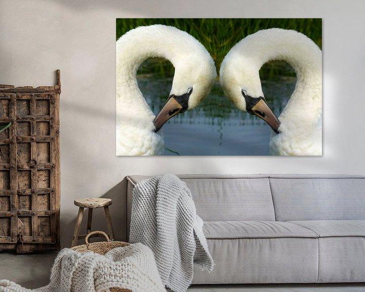Sfeerimpressie: Witte zwanen in Friesland van Fotografie Sybrandy