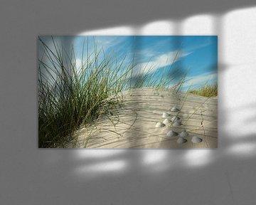 Noordzee shell van Reiner Würz / RWFotoArt