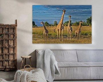 vier giraffen sur Jürgen Ritterbach