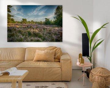 Landschapsfoto van bloeiende paarse heide van Peter van der Wal