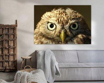 Evil Owl van Nan van Elburg